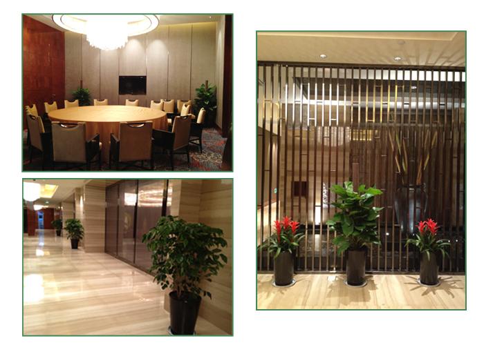 酒店室内绿化花卉出租实景 常州花木租赁 第3张