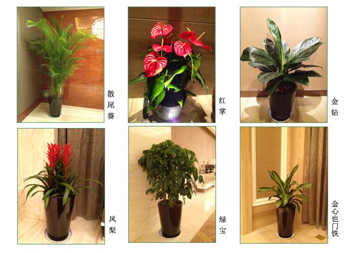 酒店室内绿化花卉出租实景 常州花木租赁 第7张