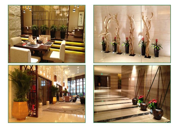 酒店室内绿化花卉出租实景 常州花木租赁 第5张
