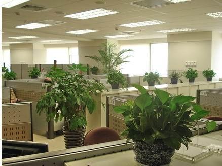 办公室摆放花木有哪些好处? 行业资讯