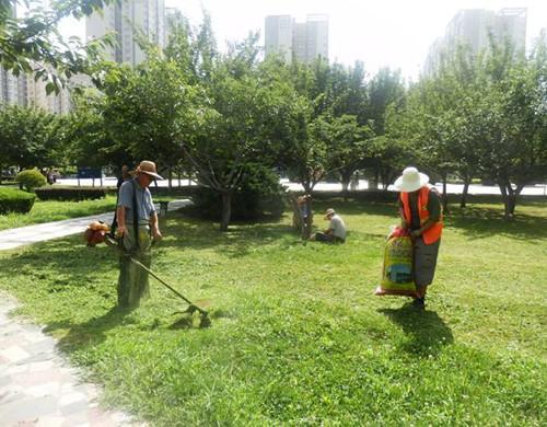 园林绿化养护存在的意义 行业资讯