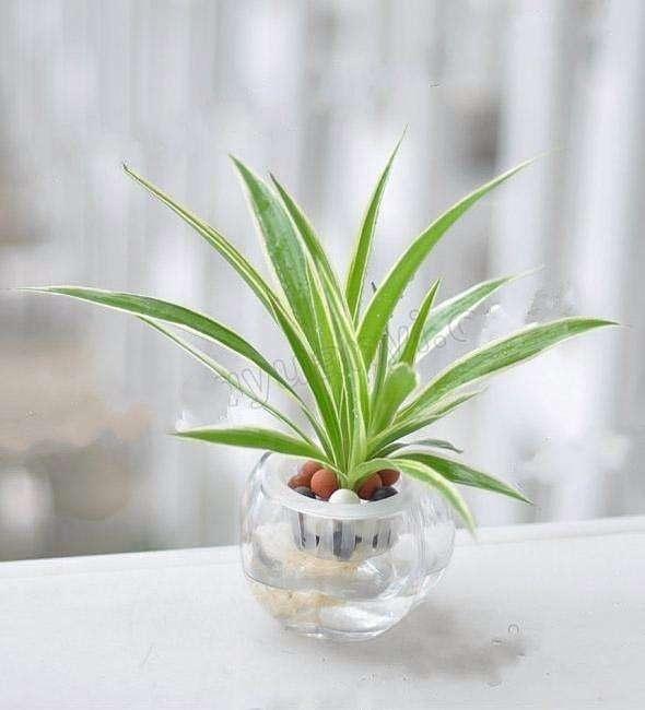 czmqs4.jpeg 注意这六点,就能养好水培植物 行业资讯 第4张
