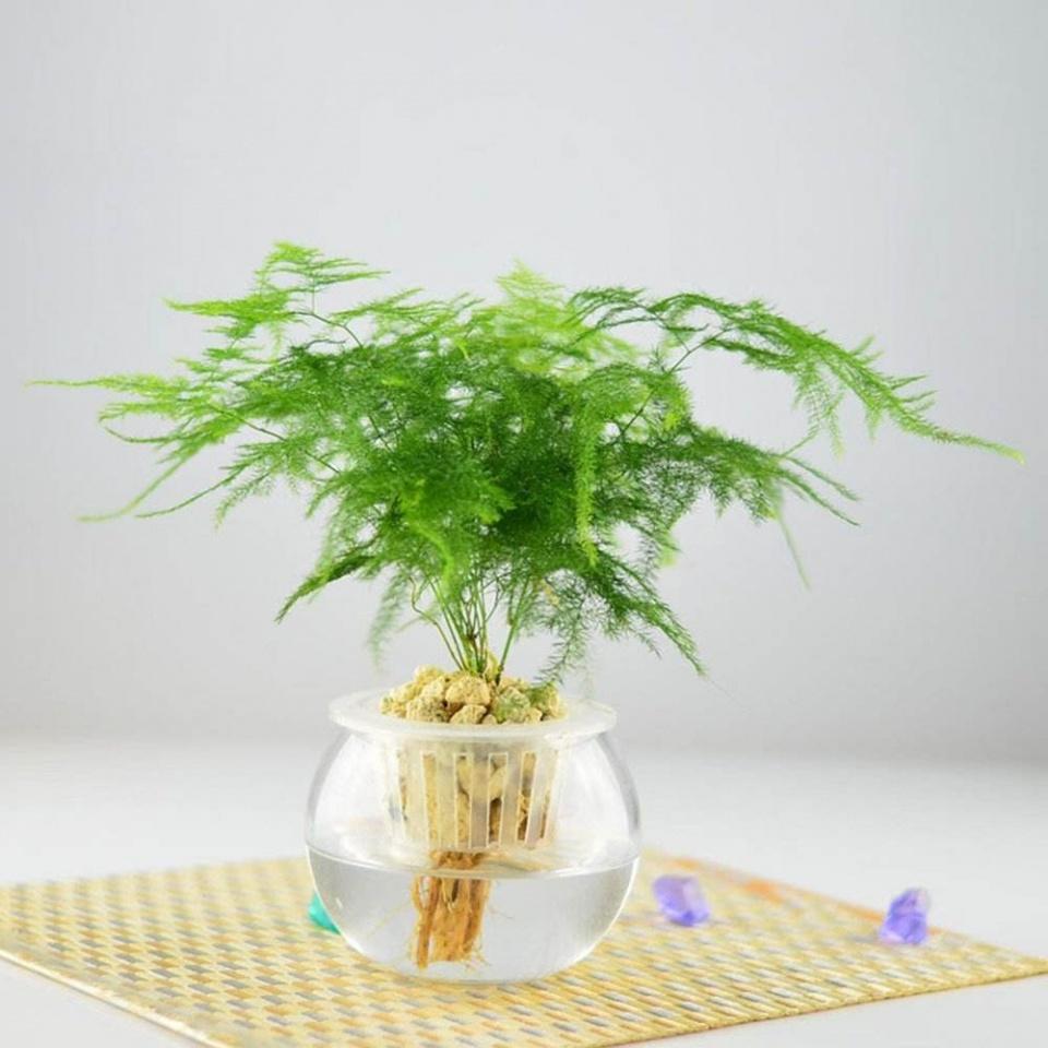 czmqs7.jpeg 注意这六点,就能养好水培植物 行业资讯 第7张