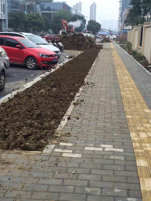 常州道路绿化施工案例 常州绿化养护 第4张