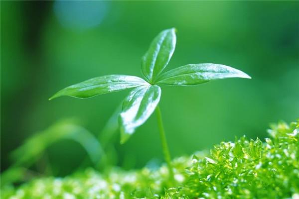 最适合在办公室养的10种绿植 办公室适合放哪些绿化植物? 行业资讯 第1张
