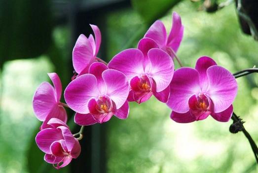 蝴蝶兰的养殖方法和养护注意事项 行业资讯 第2张