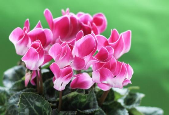 夏季不能浇水的七种常见花卉介绍 行业资讯 第6张