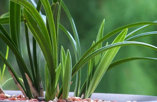 人不在家怎么给植物浇水 行业资讯