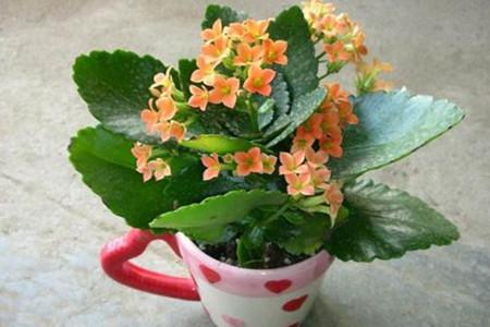 介绍四种花朵较大的植物,颜色鲜艳赛杜鹃 行业资讯 第3张