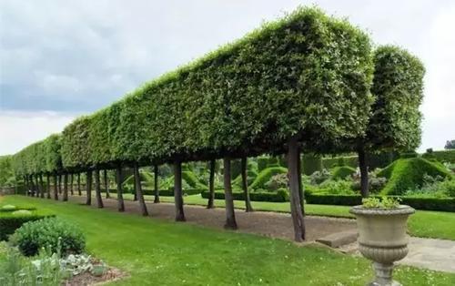 园林景观设计中需要掌握哪些观赏树的知识? 行业资讯