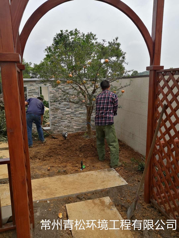 别墅庭院绿化 第3张 别墅庭院绿化 常州绿化养护 第3张