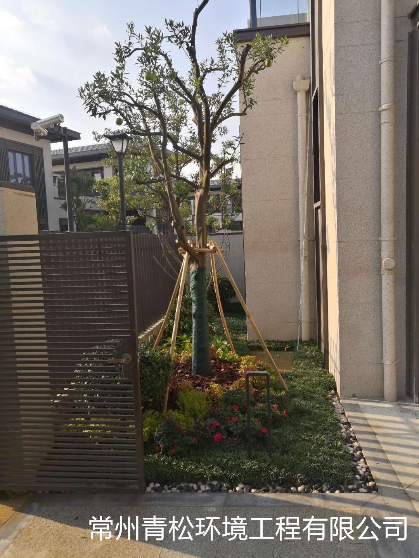 别墅庭院绿化 第7张 别墅庭院绿化 常州绿化养护 第7张